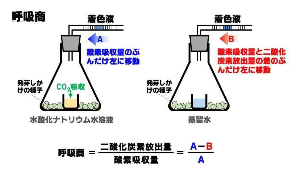 呼吸商の実験