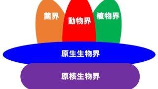 生物の系統 分類の基準「五界説」と「三ドメイン説」