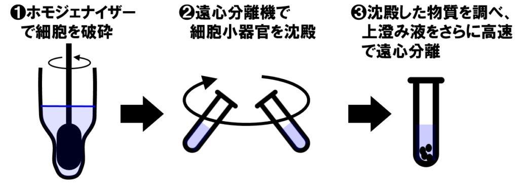 細胞分画法