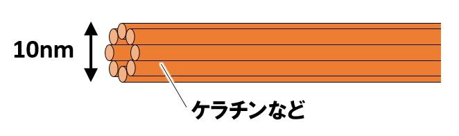 中間径フィラメント