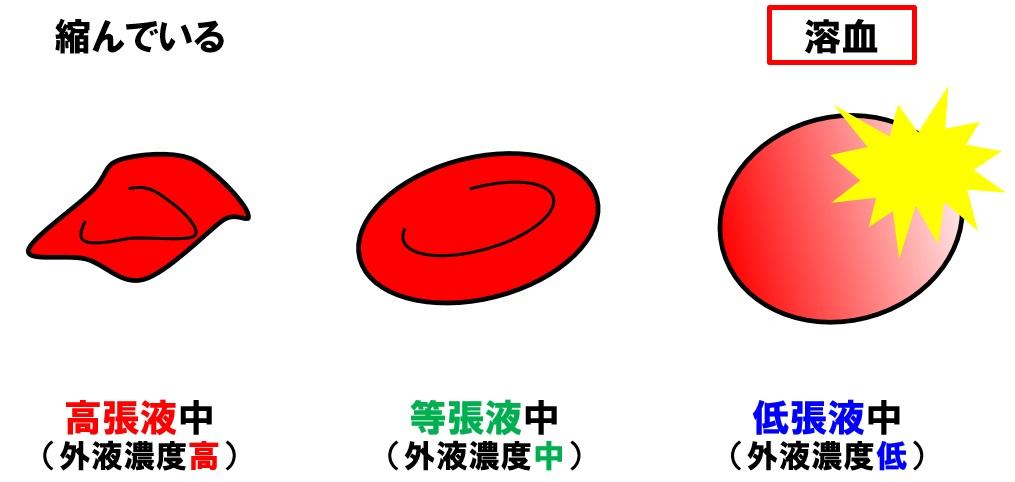 動物細胞の溶血