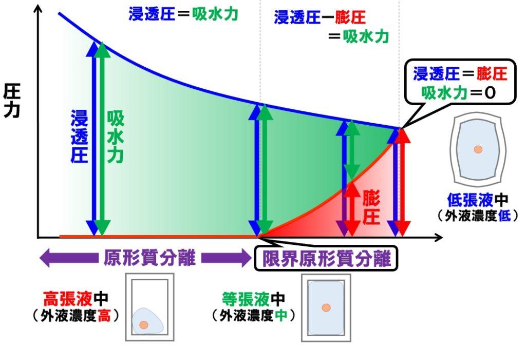 膨圧と吸水力2