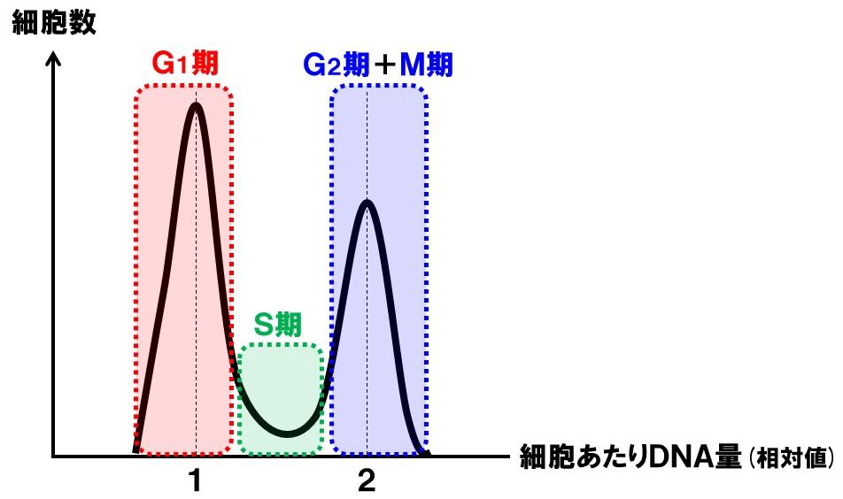 細胞数とDNA量
