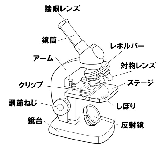 顕微鏡の各部の名称