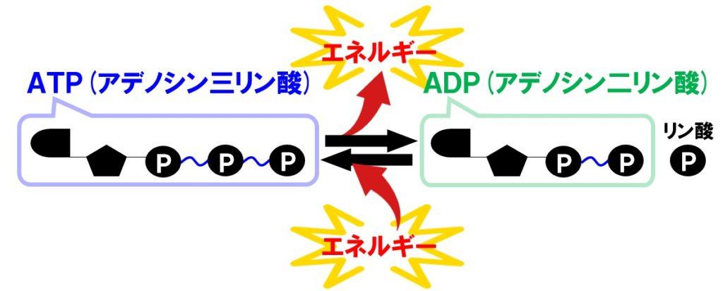 ATPとADP