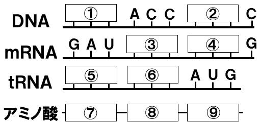 遺伝暗号の読解問題