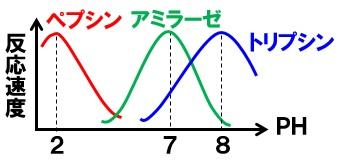 酵素 最適pH