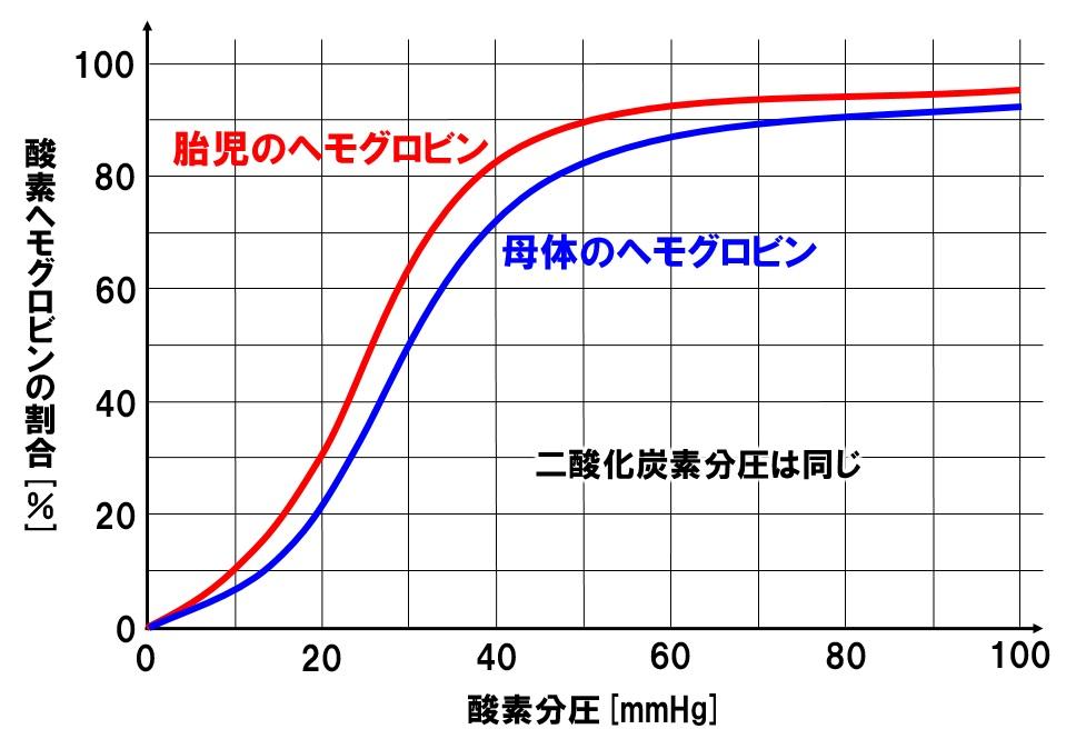 胎児と母体の酸素解離曲線