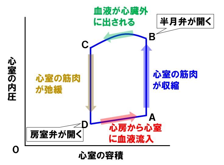 心室のグラフ