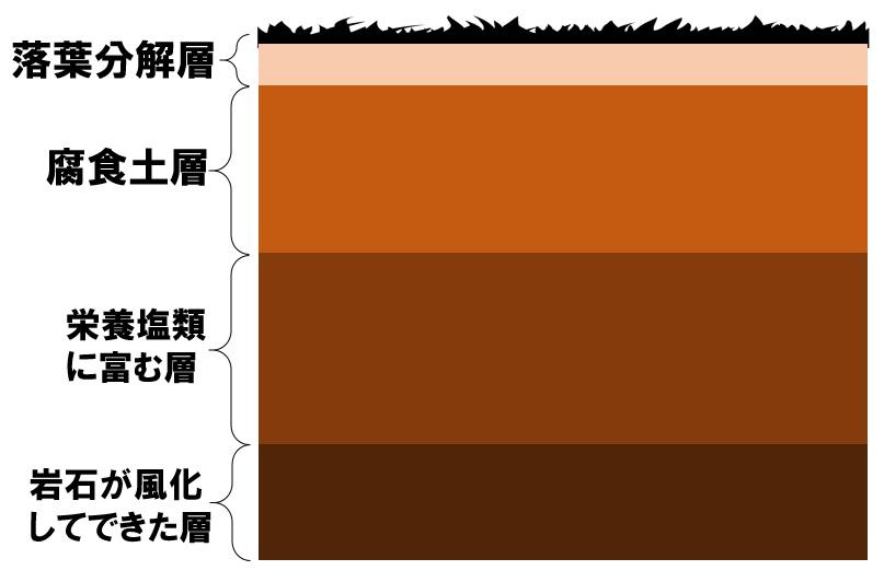 土壌の階層構造