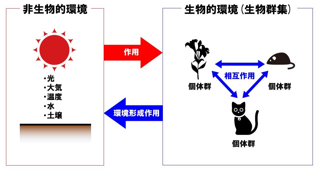 生態系 作用・環境形成作用