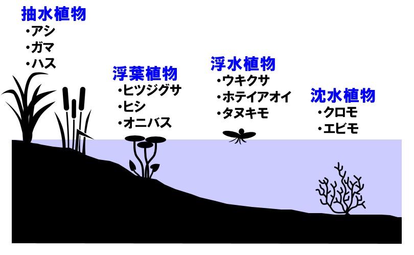 水辺の植生