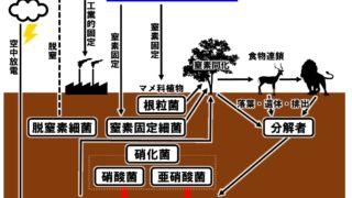 生物基礎「窒素循環」窒素固定・硝化・窒素同化・脱窒