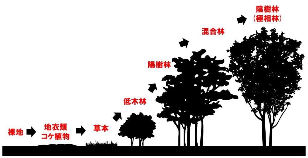 植生の遷移