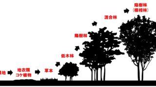 生物基礎「植生の遷移」一次遷移と二次遷移・乾性遷移と湿性遷移
