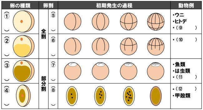 卵割様式 問題